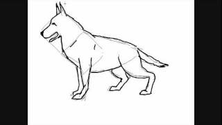All comments on dessin de chien berger allemand comment - Coloriage berger allemand ...