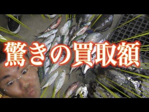 【釣れた魚を売る】所持金0円で釣り生活 14話【伊是名島編】