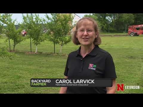 South Sioux City Orchard