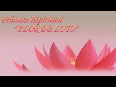 La meditación Flor de Loto. Meditación básica. Practica Espiritual
