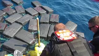 COAST GUARD: 7 Tons of COCAINE and a Turtle