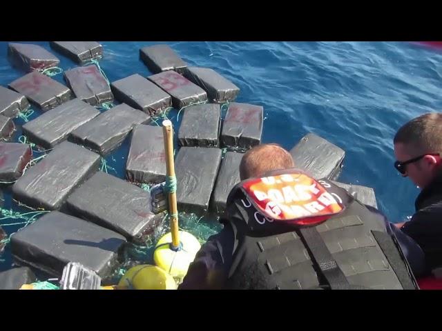 El rescate de la tortuga atrapada entre fardos de cocaína