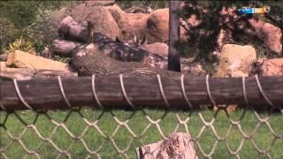 Alles neu macht der Mai  | Elefant, Tiger & Co. (618) | MDR