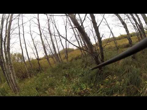 Sask Farmland Moose hunt Bow kill