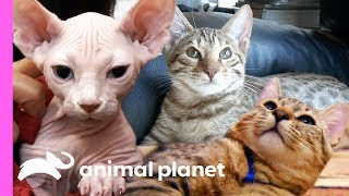 3 Insanely Cute Feline Companions   Cats 101