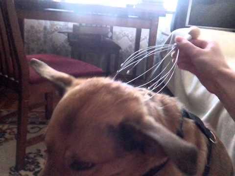 Коту массажером чешут голову кавитационный массажер для тела