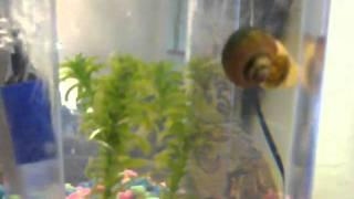 Grant's pet snail