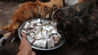 Cats eating raw fish  Kittens eating fish | Feeding Cats | The gohan dog and cat