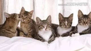 🌻Чем кормить котёнка до года🌻