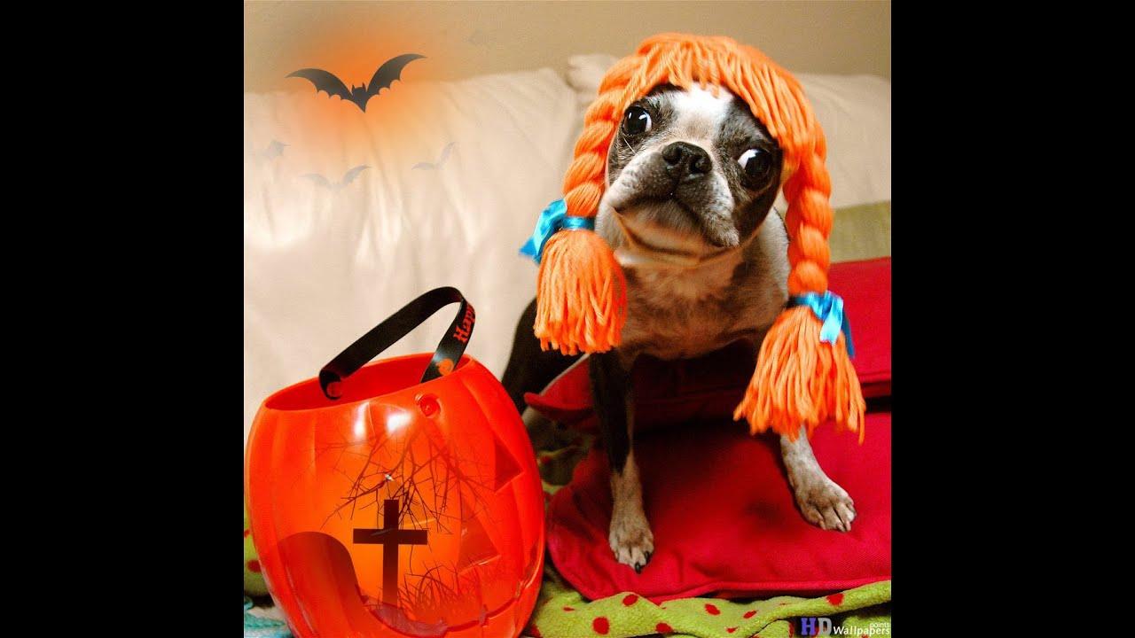 & Animals In Halloween Costumes - YouTube