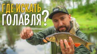 ГДЕ ИСКАТЬ ГОЛАВЛЯ на малых реках Рыбалка в незнакомом месте