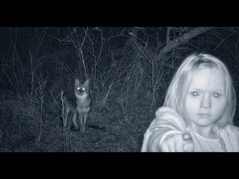 15 Creepiest pics accidentally captured on trail cameras