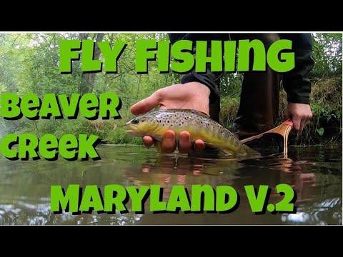 Fly Fishing BEAVER CREEK Maryland V.2
