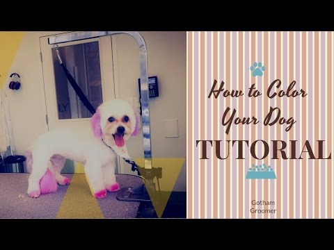 How To Color Your Dog Tutorial