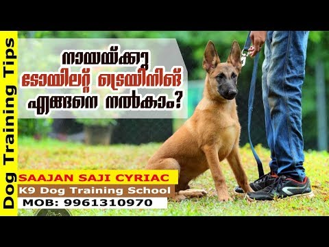 Toilet Training: How to Train Your Dog, Puppy for It? Saajan K9 Dog Training School