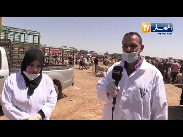 معسكر  تسخير أطباء بياطرة بنقاط بيع المواشي لمراقبة سلامة الأضاحي