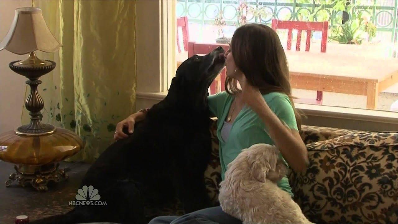 Dog Licks Little Girl - Hot Girls Wallpaper