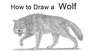 How to Draw a Wolf Growling (Snarling)
