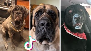 Funny Dogs of TikTok ~ Look at the Happy, Happy Dog!