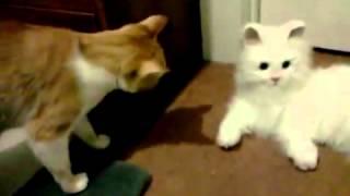 ▶ Cat Meeting FurReal Cat Lulu   YouTube 360p