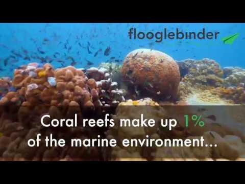 Flooglebinder: Marine Conservation in Thailand