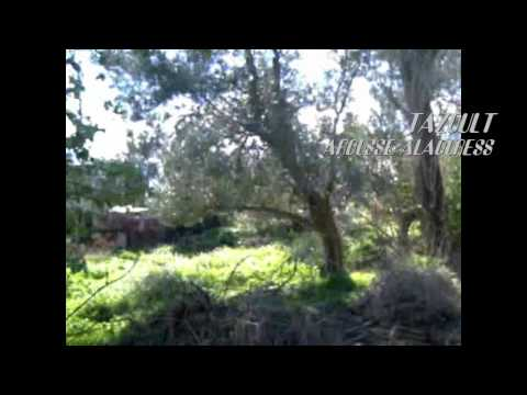 1cff88bb893f8 مدينة تازولت عروس الأوراس - YouTube