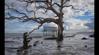 Top Five Things to do at Hunting Island State Park