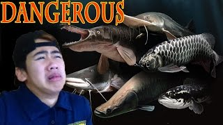 FEEDING DANGEROUS MONSTER FISH WITH MY BARE HAND thumbnail