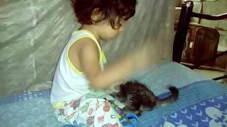 Repeat youtube video El encantador de gatos