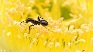 La chanson des fourmis - Jacky Galou