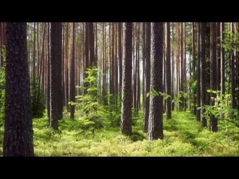 George Winston: Forest - (Full Album)