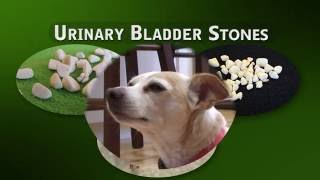 Cystotomy - $675 - Removal of Bladder Stones in Dogs and Cats