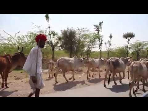 The Road to Jodhpur HD Travel Video