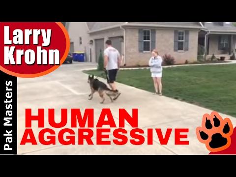 Human Aggressive German Shepherd / Pak Masters of Nashville and Bowling Green