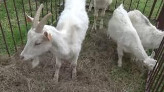 Wystawa zwierząt hodowlanych i pokaz ciągników VALTRA