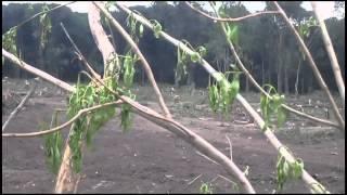 DEFORESTACION en LAS TALITAS - TUCUMAN version HD