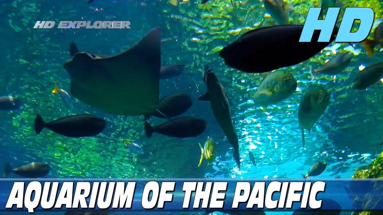 Aquarium Of The Pacific Long Beach California