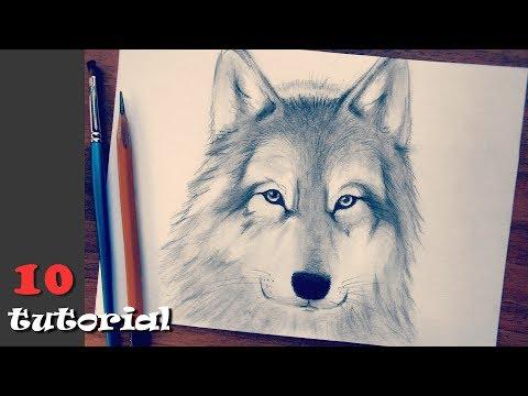Как научится рисовать волка