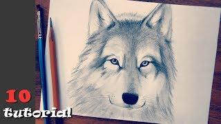 Как нарисовать волка. Легкая и необычная техника для новичков!