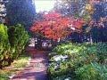 豊平公園 Oct30,31 '2010 の動画、YouTube動画。