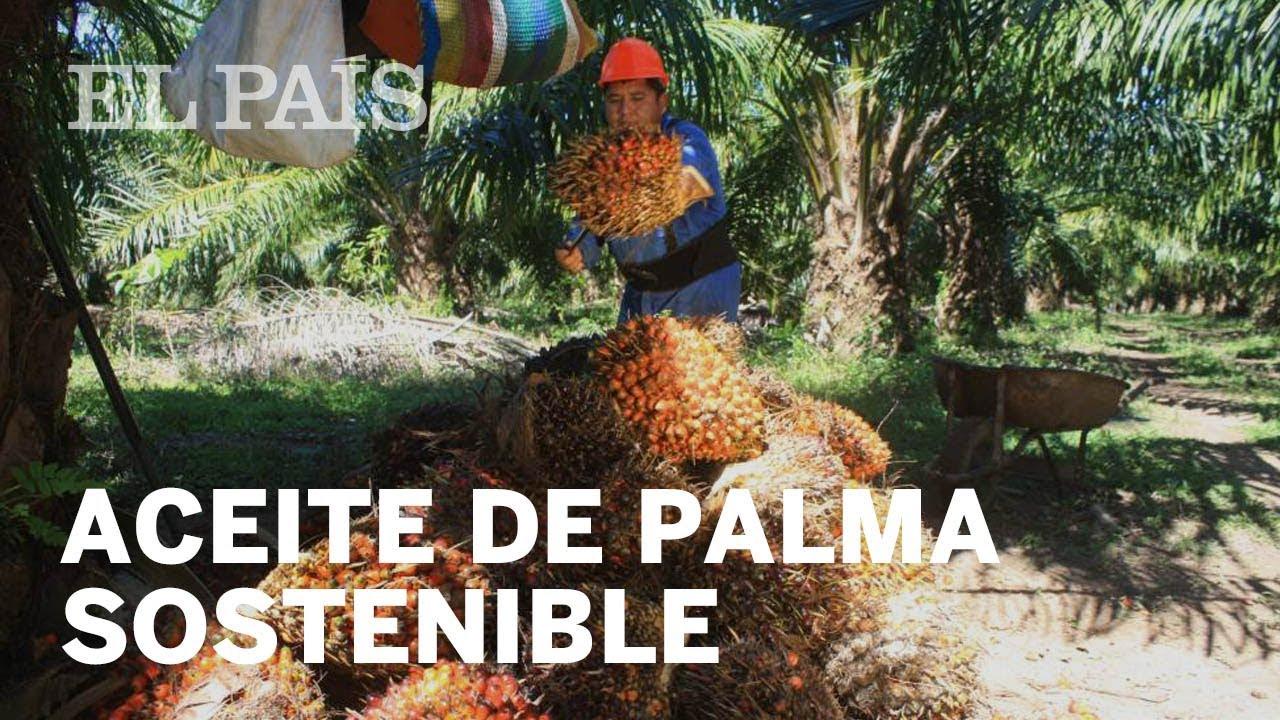 produccion de aceite de palma en panama