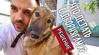 Решение проблемы бездомных собак. Поездка в Екатеринбург.