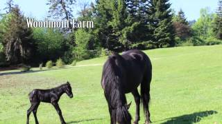 Vancouver Island Farm and Garden - managing for success