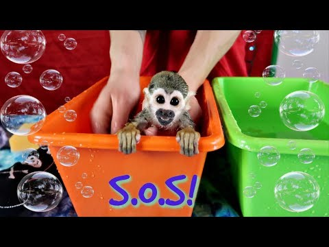 ANGRY Monkey HATES Bath Time! | Baby Monkey oLLie