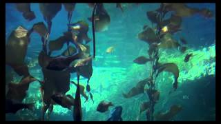 Repeat youtube video Relaxing Underwater Sounds