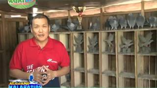 AGRITV KALAPATIDS Ferdinand Chua2 8 ep94 jan10,2016