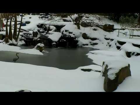 Snowy Pond Carters Nursery Patio Jackson Tn