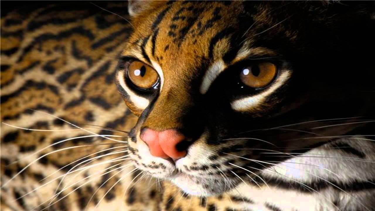 Beautiful Animals- Cool Set Of Wild Animal Wallpapers - YouTube