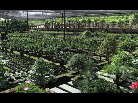 Vídeo Curso de jardinagem sp