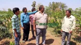 Seedless lemon farming video